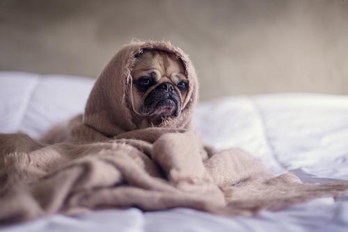 """สุนัข…ก็ป่วยเป็น """"โรคซึมเศร้า"""" ได้"""